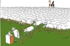 nation-of-sheep